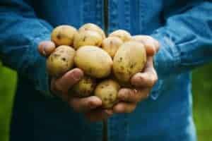 Handful of potatoes